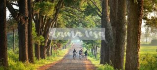 dama visa trees and kids on bike