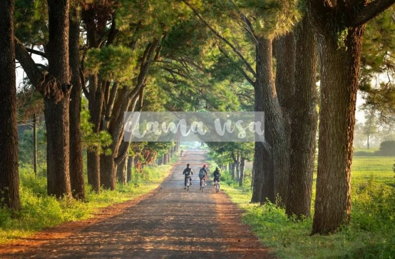 dama visa trees and kids on bike